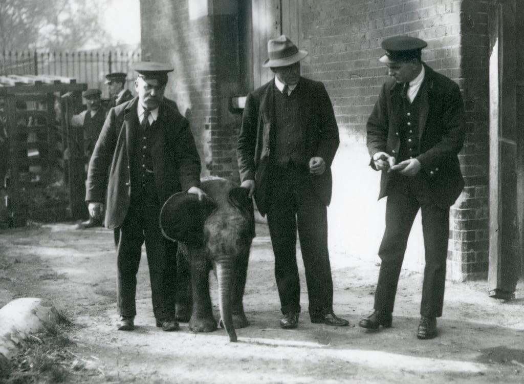 1922年10月、ロンドン動物園で飼育係 ...